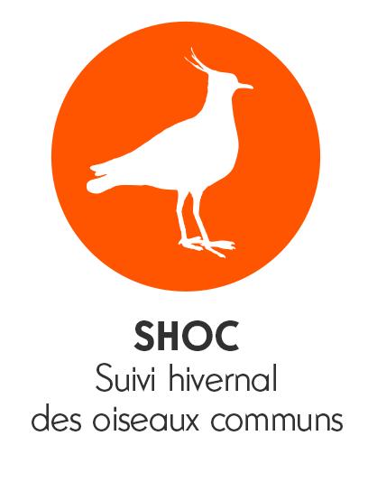 pictos_shoc2.png
