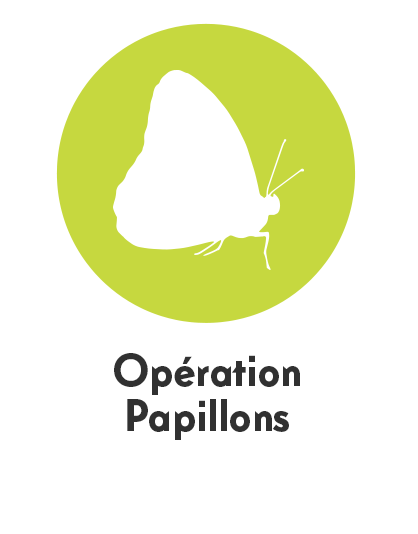 pictopapillons2.png